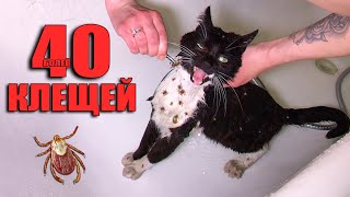 Rescue a cat from ticks. The cat is looking for a home (English subtitles) / SANI vlog