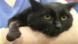 Такое Вы точно еще не видели Спасение кота и его первые дни новой жизни Я плачу От счастья Он жив!