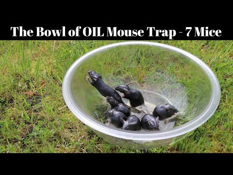 Simple No-Kill Trap for Mice & Rats