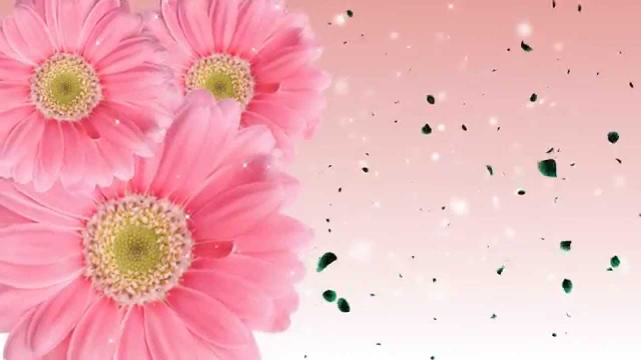 Animated flowers blooming background youtube - Floral background ...