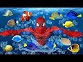 Learn Colors for Kids with SPIDERMAN Under the Sea Colored Fish FINGER FAMILY SONG