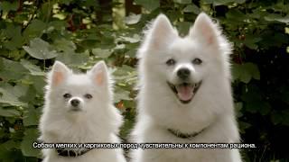 Корма Pro Plan (Про План) для собак