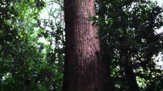 奏上 まつりの巻 第20帖 「神々様への誓」 純野静流 検索動画 23