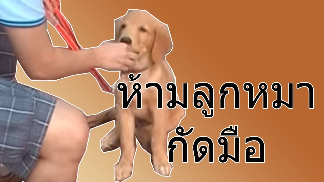 PetOasis : ห้ามลูกสุนัขกัดมือ EP01