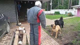 Тест №34. Две собаки на охране территории