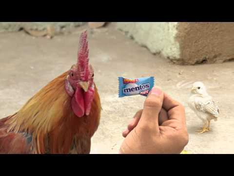 New Mentos Ad - Angry Chicken Dad #FarakPadega