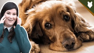 COCKER SPANIEL HEALTH AND LIFE EXPECTANCY