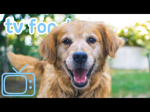 The ULTIMATE TV for Dogs! Enjoy Virtual Dog TV & Relaxing ASMR Music!