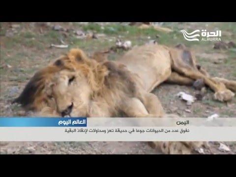 فيديو: أقدم حدائق الحيوانات في الشرق الأوسط مهددة بالإغلاق