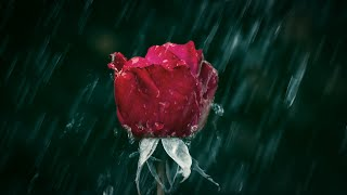 Michael Ortega - Last Memory