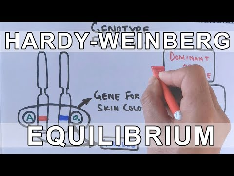 Hardy-Weinberg Principle | Conditions for Hardy-Weinberg Equilibrium