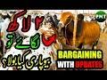 Cow Mandi 2019 Block 8 BARGAINING & VIP Cattle Farms Updates | Sohrab Goth Cow Mandi Bakra Eid 2019