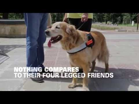 Service Dogs Change Veterans Lives