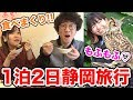 食べまくり&フクロウに癒されまくりの1泊2日静岡旅行!【インスタ映え】