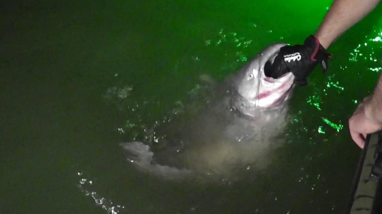 Night fishing wheeler lake giant 74 pound catfish youtube for Wheeler lake fishing report