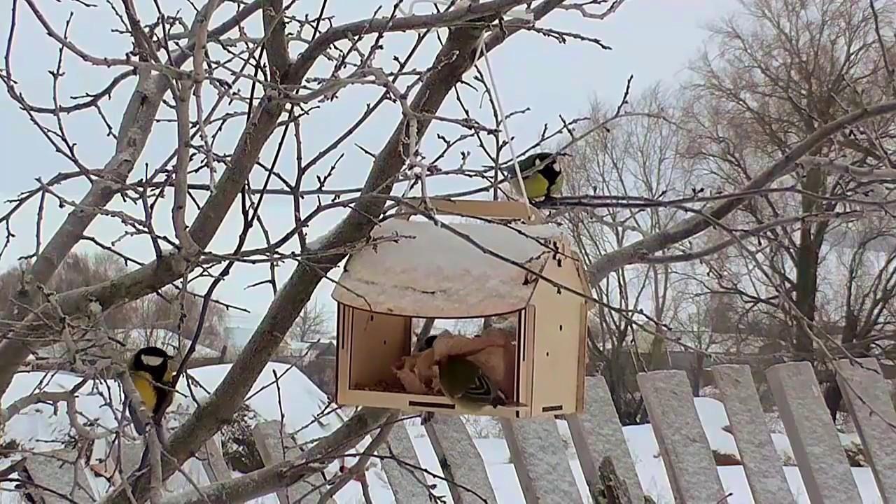 Звуки природы.Зима.Кормушка для птиц.Синицы и воробьи ...