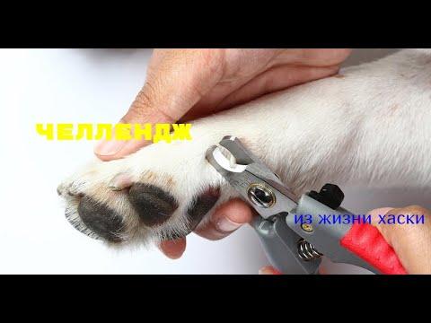 ЧЕЛЛЕНДЖ!!!Как обрезать ногти хасям,на собственном примере!