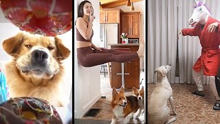 The Most FUNNY & CRAZY Dog Videos of The Year | CLASS OF 2020