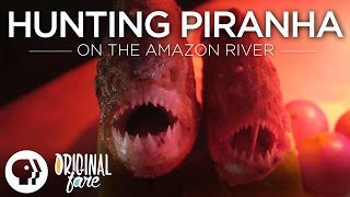 Hunting Piranha on the Amazon