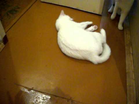 кот Ёрик и его реакция на запах хлорки