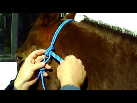 How To Properly Tie Your Rope Halter