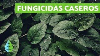 Fungicidas Caseros Recetas Efectivas Con Vídeos