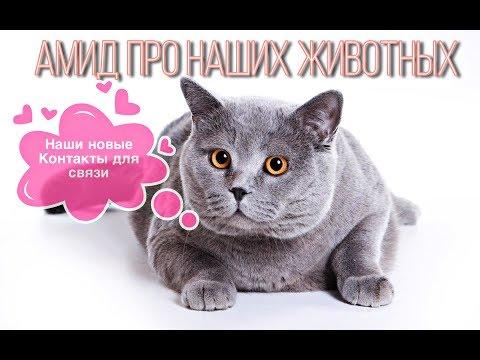Амид про домашних животных и объявление Любови Орловой