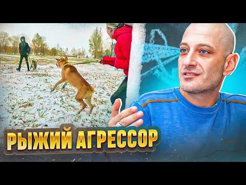 первое знакомство с собакой как себя вести