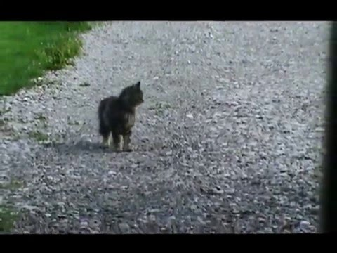 Cat waits for school bus