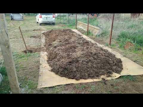 Червь Старатель- навозный червь! Подготовка к разведению червя в бурте.
