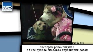 эксперты рекомендуют: в Ухте прошла выставка породистых собак   15 ноября   18:00  