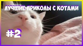 Лютые мемы с котами. ЕНОТ ИМПОСТЕР. смешные мемы
