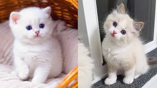 Download Baby Cats - Cute and Funny Cat Videos Compilation #34 | Aww Animals