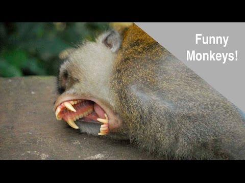 Funny & Cute Bali Monkeys