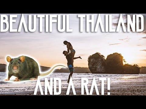 TRAVEL TO KOH PHI PHI THAILAND // RAT IN OUR ROOM!?