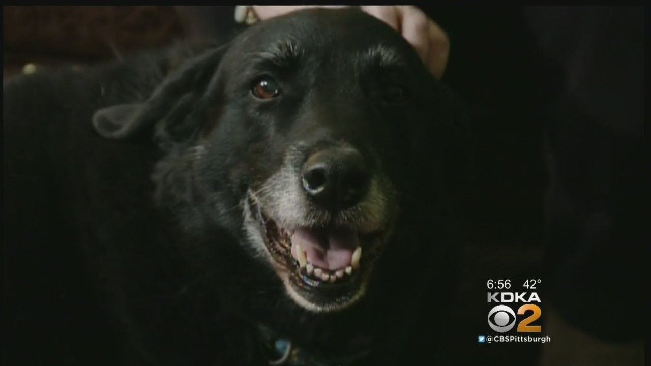 Missing Dog Returns Home After 10 Years
