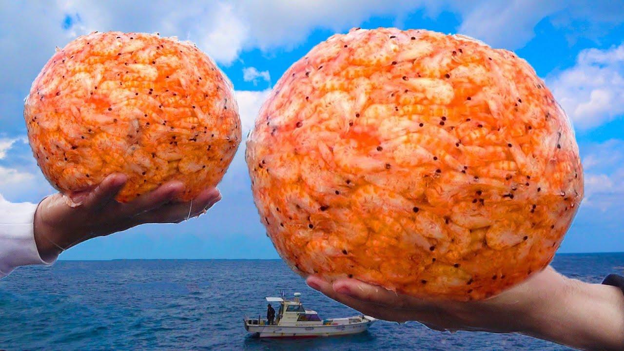 一級磯にエビ集合体投下でサメを降臨させろ!【沖縄1熱い磯で大物狙い!#6】