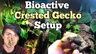 How To Setup a Bioactive Enclosure for a Crested Gecko!