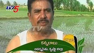 Super Green Rice Farming Yielding Profits In Rabi Season | Krishna | Annapurna | TV5 News