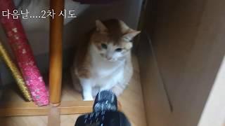 마이크 들이대서 화난 고양이
