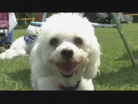 """Dogs 101"" BICHONS - Animal Planet 02 Nov 08"