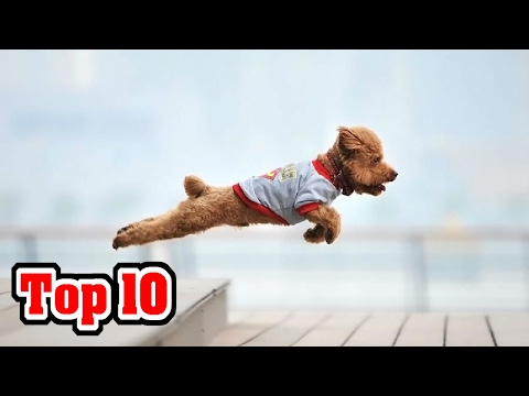 10 FAMOUS and HEROIC DOGS!