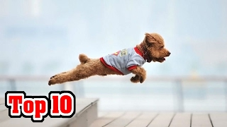 Top 10 Eye Watering Famous Heroic dogs