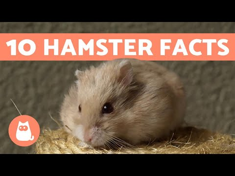 Pet Corner - 10 Facts About Hamsters - Fun and Helpful Info