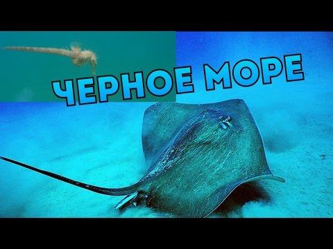 Морской дракончик опасная рыба, встречающиеся в Черном море