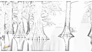 Auto Draw 2: Cypress Trees, Horseshoe Lake Conservation Area, Illinois
