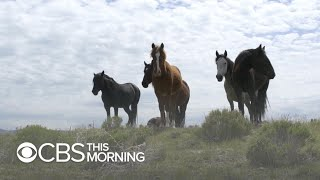 Government will now pay you to adopt wild horses