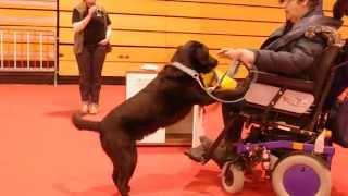 スイスのWinterthurで行われた犬のメッセHUND2014 Le Copain: Behindert...