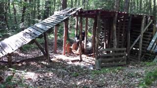 Freddy Australian Cattle Dog Ipo Training May 2012, Part 5