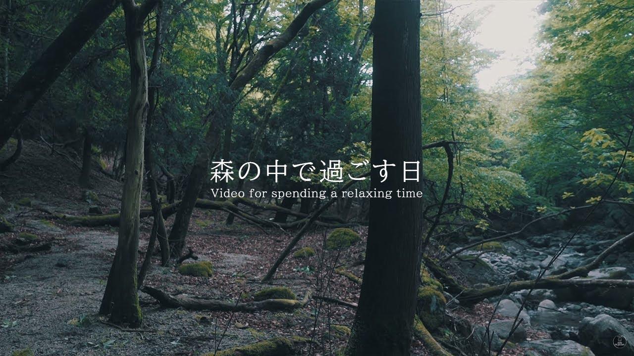森の中で過ごす日 森の音   3時間 forest sound    ASMR   睡眠